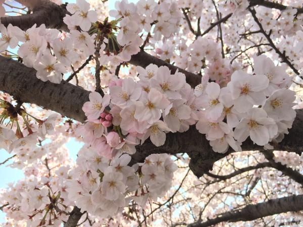 Photo Mar 30, 10 31 25 AM