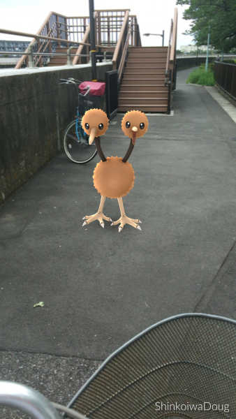 A Doduo along the Nakagawa bike path. It was hard to catch.