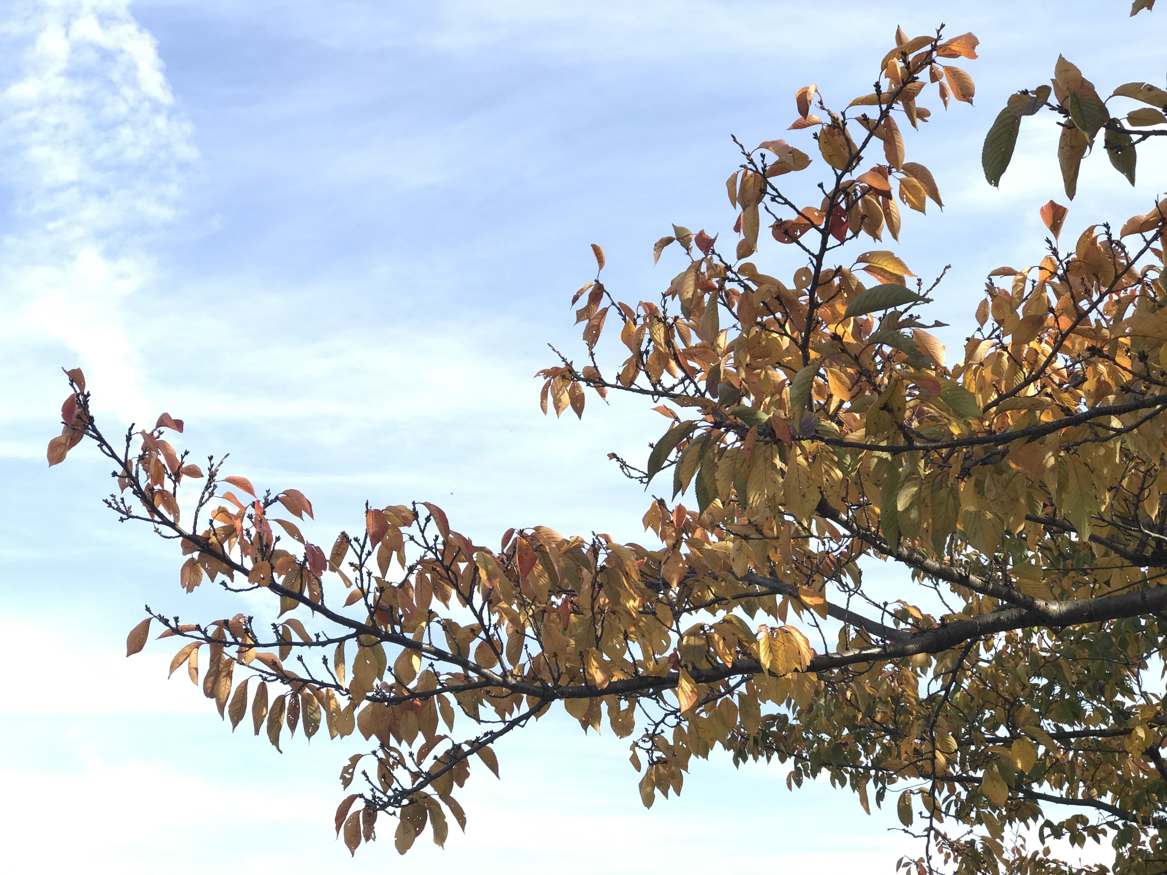 Beautiful fall weather, down by the river | Doug Reports